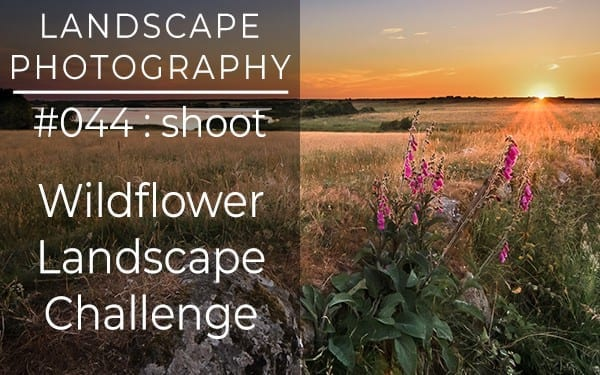 #044: Landscape Photography Wildflower Challenge