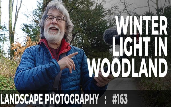 Winter Light In Woodland (Ep #163)